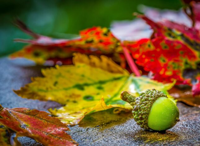 Image of an acorn and autumn leaves depicting the journey, growth and development of content