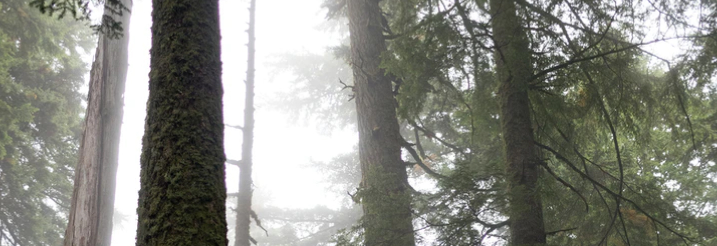 Sunlight shining through a forest to demonstrate growth through learning